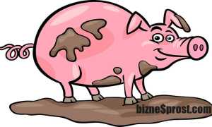 Бизнес-план по разведению свиней – инструкция по составлению + расчеты!