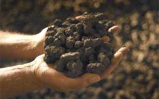 Как определить какого типа почва на огороде
