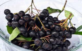 Как заморозить черноплодную рябину