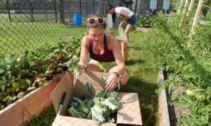 Июнь в саду и на даче – работы которые нужно сделать на участке, огороде и в саду