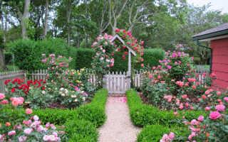 Как самостоятельно создать розарий на своём загородном участке?