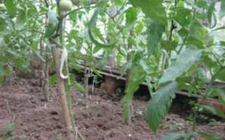 Как правильно удалить лишние листья у помидоров