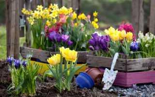 Дачные цветы, которые цветут летом