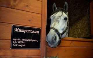 Как назвать черную лошадь