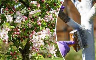 Как правильно ухаживать за яблоней весной? Особенности и рекомендации