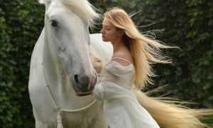 К чему снится лошадь женщине, видеть лошадь женщине во сне: