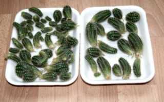 Как садить кактус: основные секреты размножения