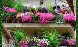 Балконные цветы: фото и название растений для создания райского уголка