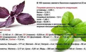 Все сорта базилика: чем отличаются зеленый, фиолетовый и красный сорт