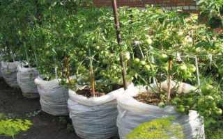 Как вырастить помидоры в мешках фото