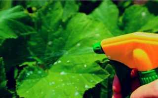 Как обрабатывать и подкармливать огурцы сывороткой и йодом