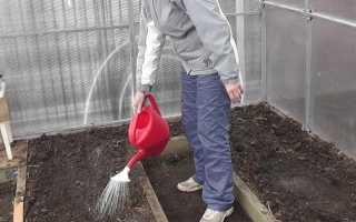 Как обеззаразить почву в теплице весной и осенью