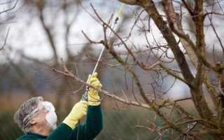 Защита сада от вредителей и болезней осенью