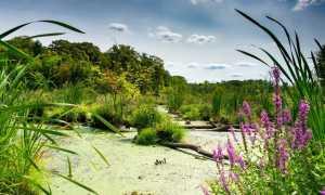 Болотные растения: фото с названиями и описаниями