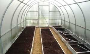 Выращивания и уход за баклажанами в теплице, фото, видео