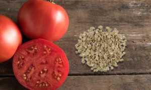 Закаливание семян томатов перед посадкой в холодильнике и при естественных условиях