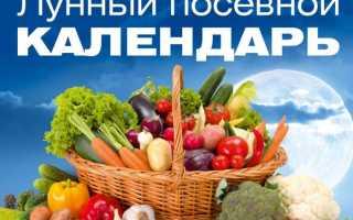 Благоприятные дни февраля в 2020 году для садовода-огородника