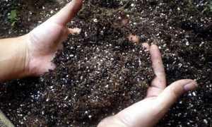 Инструкция по применению удобрения суперфосфат, видео, отзывы огородников