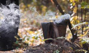 Башкирская (бурзянская) бортевая пчела: отзывы, фото, описание