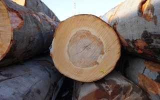 Древесина бука, ее основные свойства и характеристики