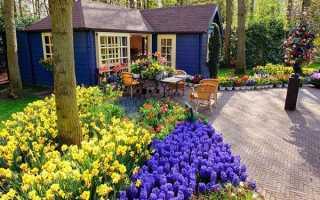 Весенние первоцветы (фото с названиями) — разбудите ваш дачный участок!