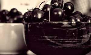 Вишня Россошанская черная