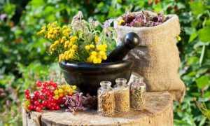 Борьба с вредителями в саду