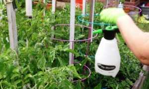 Как подкормить помидоры йодом и борной кислотой: когда необходима подкормка, рецепт приготовления раствора, видео