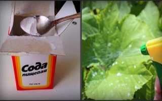 Как проводить опрыскивание огурцов содой