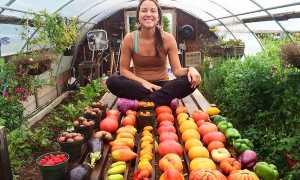 Выращивание в теплице круглый год – какие растения можно посадить, особенности процесса