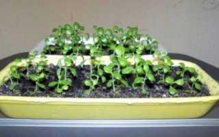 Выращивание гардении из семян в домашних условиях