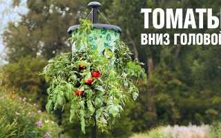 Вверх корнями — необычный способ выращивания томатов