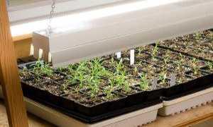 Как и чем подсвечивать рассаду петунии: виды осветительных ламп и краткий обзор их характеристик