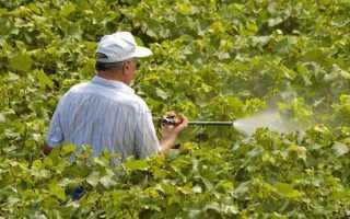 Как правильно проводить обработку винограда медным купоросом весной и зачем это нужно