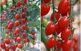 4 сорта ранних томатов, которые удивят урожайностью и вкусом