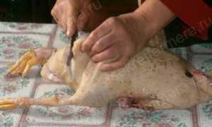 Как разделать утку на порционные куски в домашних условиях: как правильно ощипать и очистить от внутренностей, фото,
