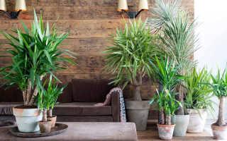 5 растений, которые подойдут к любому интерьеру и не будут смотреться нелепо