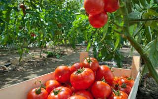 Готовим грядку для помидоров